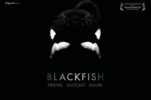 widemodern_blackfish_072213620x413